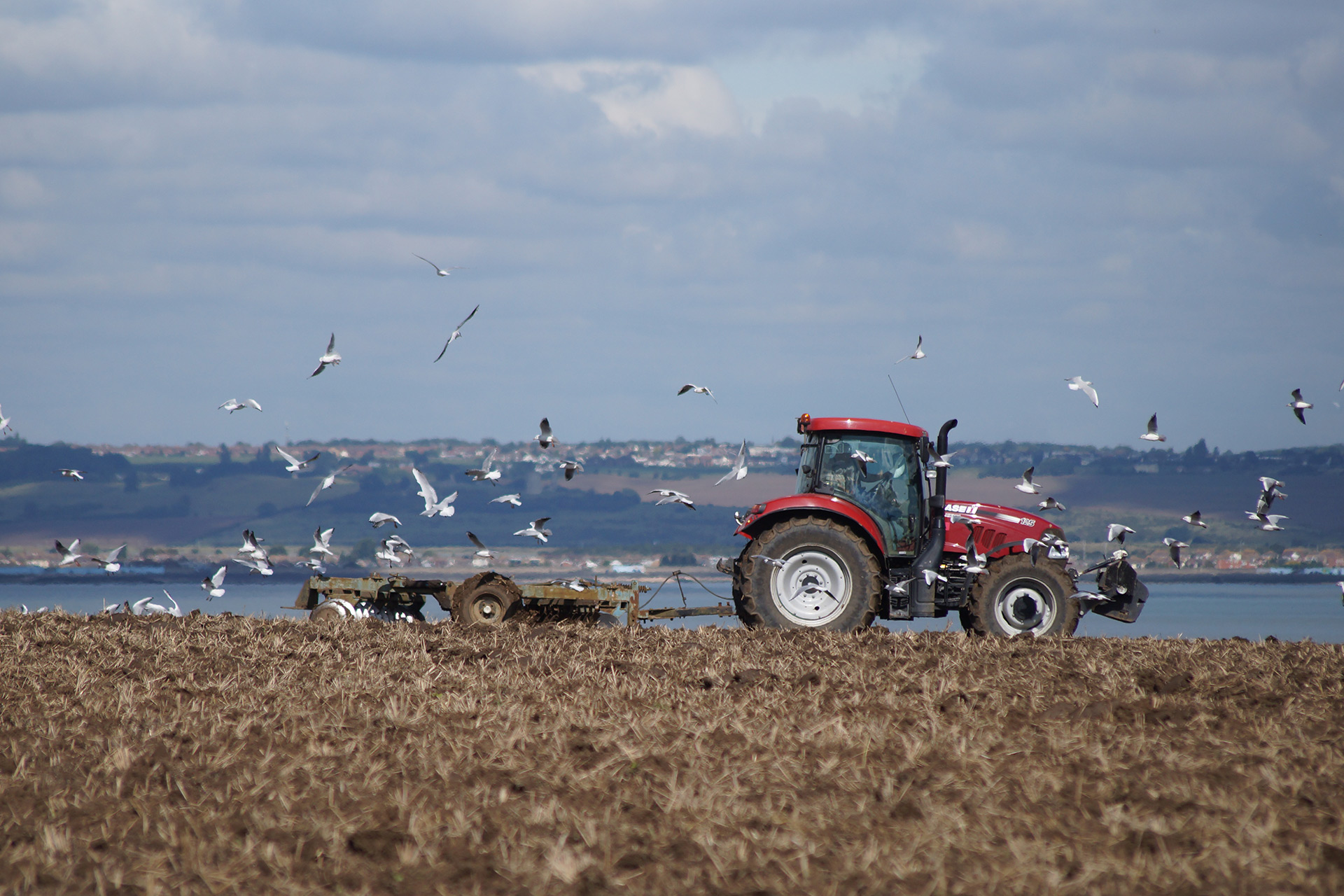 A tractor in a field surrounded by seagulls