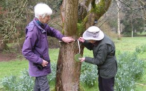 2 women measuring the diameter of a tree